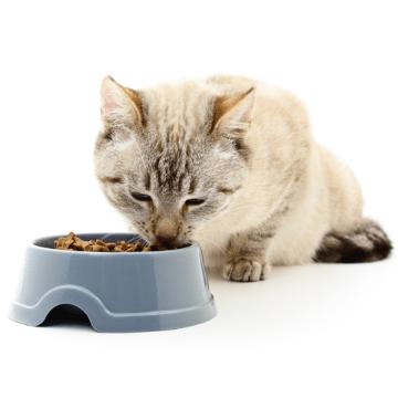 Hrana pisica